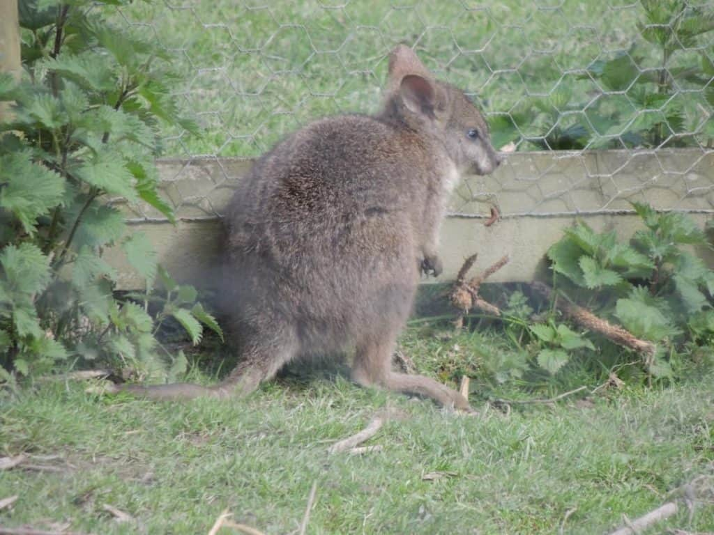 March 2017 Newsletter Palma Wallaby Storks Spring Cornwall Nature Conservancy